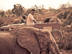 """Yao Ming to Star in Animal Planet Special, """"Saving Africa's Giants With Yao Ming."""" TONIGHT!"""