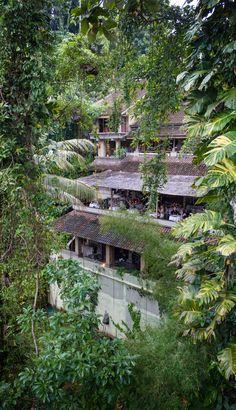 The view from bridges Restaurant in Ubud, Bali. Lovely high end dining. #bali #ubud #familytravel
