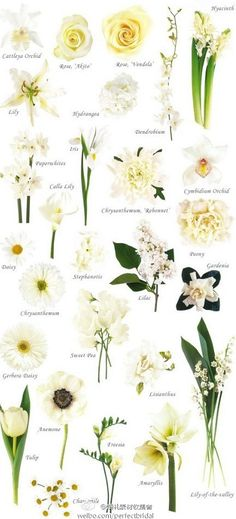 types of white flowers - reception, bouquet?