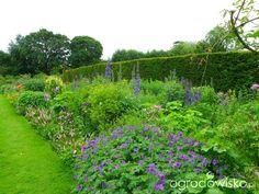 Anglia czerwiec 2013 - strona 8 - Forum ogrodnicze - Ogrodowisko