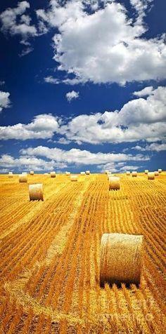 Farm field with hay bales in Saskatchewan by monique