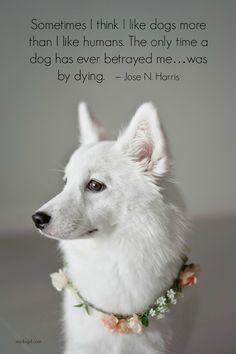 Dog Quotes, Dog Love, Puppy.