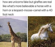"""36 Entertaining Memes That'll Pull You From The Darkness - Funny memes that """"GET IT"""" and want you to too. Get the latest funniest memes and keep up what is going on in the meme-o-sphere. Animal Jokes, Funny Animal Memes, Cute Funny Animals, Funny Cute, Haha Funny, Funny Stuff, Funny Things, Funny Unicorn Memes, Random Stuff"""