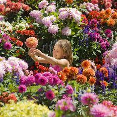 Flower power: Six-year-old Amy Chesterman has found her favourite #flowers #Garden #Flowerpower #picoftheday #florallove #kidswithflowers #cute #florist #australia