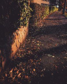 #favseason #novemberfalls #autumnlove #suceava.romania