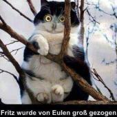Katze denkt sie wäre eine Eule | echtlustig.com - Lustige Bilder, Verrückte Fotos und Videos die dich zum Lachen bringen