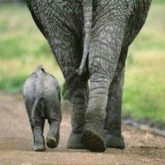 Elephants ♡