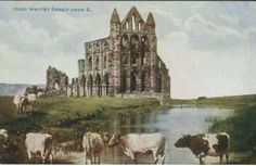 Photochrom Co Ltd Postcard - Celesque Series - Whitby Abbey from E (cattle)