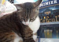 Editorial, Cats, Animals, Literatura, Gatos, Animales, Animaux, Animal, Cat