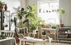 Fantastiche immagini in stand con piante su