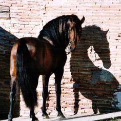 """Hello there, This photo reminds me of my time in Spain, you could find the most impressive horses tied to rough walls, in places that """"horsey"""" people do not expect to see horses. I was always going to tumble down barns and out would come a horse of dreams!"""