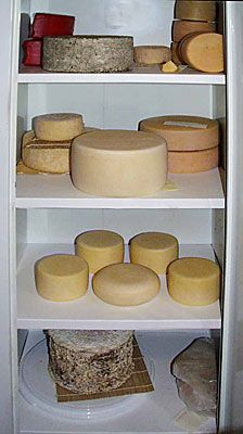 Setting up your own cheese cave  [Part 1]  If you want your cheese to ripen properly  you have to make them a good home and  take care of them like little bambinos.  These Aging considerations are:  ... A proper and as constant Temperature (45-58F) as possible  ... Specific Moisture level for the specific cheeses (~ 80-98%)  ... A certain amount of Fresh Air to remove by products of aging    Must read the whole article