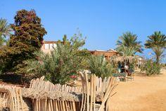Sinai desert, Nuweiba, Tarabin beach.