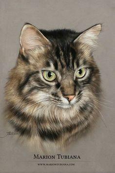 Cat Drawing, Painting & Drawing, Animal Paintings, Animal Drawings, Cute Funny Animals, Cute Cats, Color Pencil Art, Pastel Art, Fantasy Character Design