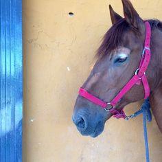 caballos, rutas ecuestres, pupilaje. Granja San Miguel
