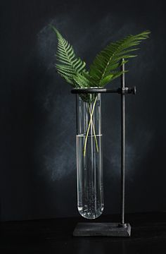 test tube ferns