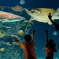 ... Aquarium on Pinterest Newport, Aquarium and Cincinnati skyline