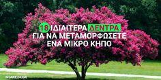 18 Ιδιαίτερα Δέντρα για να Μεταμορφώσετε Ευχάριστα έναν Μικρό Κήπο & την Αυλή Σας ! Vegetable Garden Design, Outdoor Landscaping, Better Homes, Agriculture, Garden Plants, Boruto, Home And Garden, Backyard, Landscape