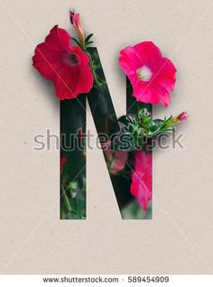 Unique Letter N alphabet made of real blooming flowers and leaves with paper cut. Illustration of floral alphabet collection for design project, poster, card, invitation, brochure and scrapbook