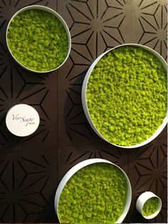 VertiScape Moss... Indoor garden walls. The stabilized lichen lives off the moisture in the air, thus requiring little to no upkeep – pruning becomes a thing of the past and watering passe as well. Even natural light is not necessary. Making it ideal for living walls.
