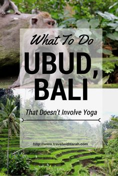 Are you heading to Ubud, Bali? But the only thing you've heard about is the yoga classes and vegan cafe's? Look no further for a complete guide for what to do in Ubud that has NOTHING to do with yoga OR vegan food!