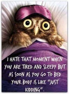 Good night just kidding. Resultado de imagem para minion owl funny good night - All For Health Cant Sleep Quotes Funny, Funny Quotes, Clumsy Quotes, Owl Quotes, Funny Sleeping Quotes, Tired Quotes, Jokes Quotes, Animal Quotes, Funny Pics