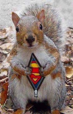 It's a bird, it's a plane, it's Super Squirrel!