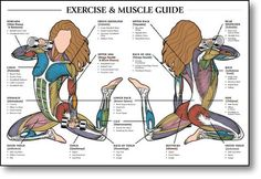 http://easyexercise.hubpages.com/hub/Buy-Exercise-Muscle-Posters-Online