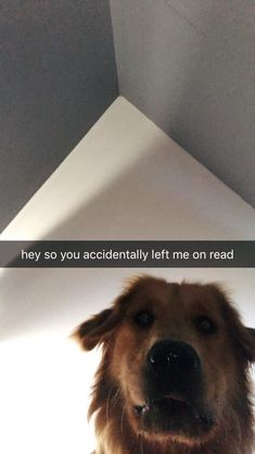 Cute animals - literally me when kenz leave me on read Funny Animal Memes, Cute Funny Animals, Cute Baby Animals, Funny Cute, Funny Dogs, Animals And Pets, Funny Memes, Cute Puppies, Cute Dogs