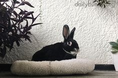 Bunny enjoys a little time among the plants - March 14, 2018