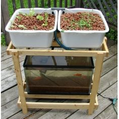 Aquarium aquaponics kit.