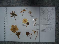 Charlotte Mason style nature journaling