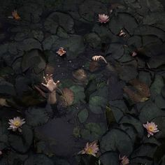 'of everything I've heard I truly believe he drowned in the lily pond'