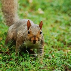 Popular Happy SquirrelAppreciationDay A squirrel us tail is very useful It helps the creature maintain