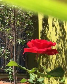 El que está listo sólo mira la rosa; el que está preparado también se fija en la #yuyuga. Es que yo soy silvestre ella es de jardín.  Todo por