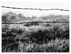 Barbed Wire and Morning Dew Black and White by SierraMtnArtPrints
