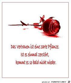das Vertrauen ist eine zarte Pflanze......