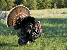 Turkey Hunting 101: Put the sun to your advantage
