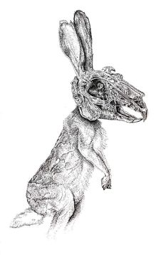 rabbit skull - Google Search