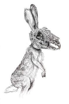 rabbit skull - Google Search