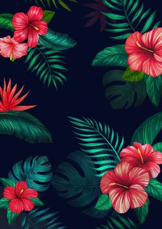 Flower wallpaper for iphone or android tags flowers floral pattern backgrounds mobile wallpaper iphonewallpaper flowers Cool Black Wallpaper, Android Wallpaper Black, Floral Wallpaper Iphone, Tropical Wallpaper, Iphone Background Wallpaper, Cool Backgrounds, Flower Backgrounds, Flower Wallpaper, Pattern Wallpaper