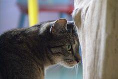 Liefdevolle opvang van uw kat bij Dierenpension Ingen