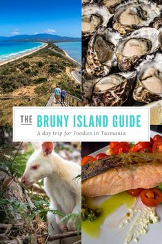 The perfect Bruny Island day trip for foodies Tasmania Road Trip, Tasmania Travel, Western Australia, Australia Travel, Queensland Australia, Bruny Island, New Zealand Travel, Travel Advice, New Zealand