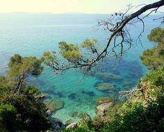 Domaine du Rayol - Jardin de la Méditerranée (par sophie.valenti)