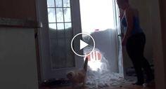 Incrível o Que Este Gato Faz Para Entrar Em Casa! http://www.funco.biz/incrivel-este-gato-para-entrar-em-casa/