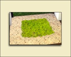 Sims 4 Designs: Moss Wall and Rug