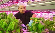 La agricultura de interior es una forma cada vez más popular de los cultivos que sucede en el interior.  Dónde granjas tradicionales se basan en sistemas de riego, el suelo y la luz solar, las granjas de interior usan LEDs o lámparas de sodio de alta presión, y crecen en sistemas hidropónicos o aeropónico.