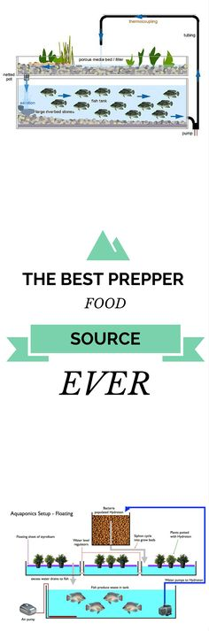 Must Have Food Source For Every Prepper: http://vid.staged.com/HW8o