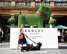 The Radley Dog made from artificial topiary by Agrumi artificial boxwood matting