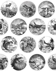 Darwin on a Plate
